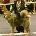 dogshowdresden54091